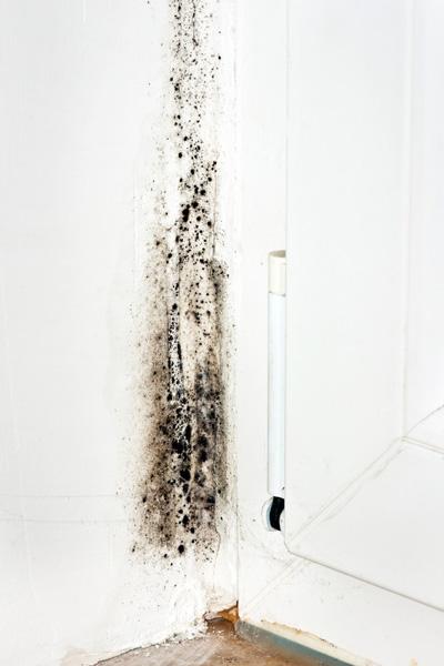 mold next to a shower